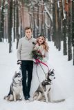 De beaux jeunes mariés avec le chien de traîneau deux sibérien sont posés sur le fond de l'illustration neigeuse de forêt Photographie stock libre de droits