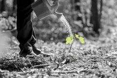 De bebouwde mening van water het gieten van kan op zaailing Stock Foto's