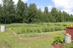 De bedden met groenten Stock Foto's
