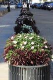 De bedden van de bloem Royalty-vrije Stock Foto's