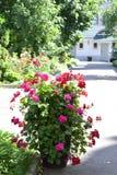De bedden van de bloem Royalty-vrije Stock Foto