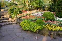 De bedden van de bloem in een park Royalty-vrije Stock Afbeeldingen