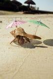 De Bedelaar van het Strand van de Krab van de kluizenaar Stock Fotografie