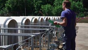 De bedrijfsmedewerker controleert voorwaarde van kalveren bij het landbouwbedrijf stock footage
