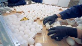 De bedrijfsmedewerkers die eieren sorteren, sluiten omhoog stock videobeelden