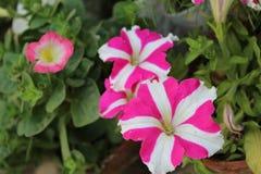 De beelden van bloemen stock afbeeldingen