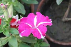 De beelden van bloemen royalty-vrije stock fotografie