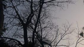 De beelden van de boomschaduw Stock Afbeelding