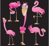 De beeldverhalen van flamingo's Stock Afbeeldingen