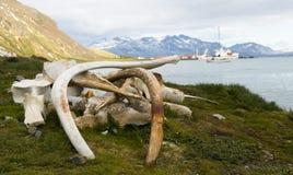 De Beenderen van de walvis - Post van de Walvisvangst van het Zuiden de Georgische Royalty-vrije Stock Foto's