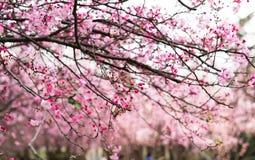 De Begoniabloem in kunmingï ¼ ŒChina Royalty-vrije Stock Foto