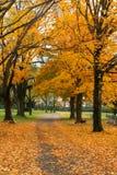 De Begraafplaats van de herfst stock afbeeldingen