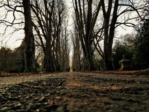 De begraafplaatswildernis van de oprijlaanweg Stock Afbeelding