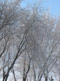 De behandelde sneeuw van de winterbomen takken tegen blauwe hemel stock afbeelding