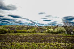 De belles fleurs j'aime des fowers Photographie stock libre de droits