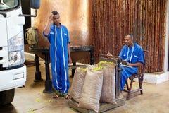 De Bemoeizieke kananga-olie, is, Madagascar Royalty-vrije Stock Afbeeldingen
