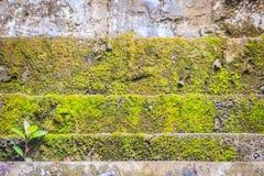 De bemoste steentreden voeren met kleine groene boom op Stenenweg door groen mos in de bos Oude Bemoste trap met growin wordt beh stock fotografie