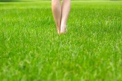 De benen groen gras van de vrouw Stock Afbeeldingen