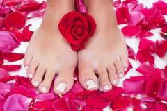 De benen van de mooie vrouw met rode roze bloemblaadjes Stock Foto