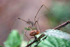 De benen van de spin stock afbeelding