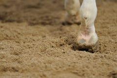 De benen van het paard sluiten omhoog Royalty-vrije Stock Foto