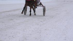 De benen van het raspaard met ruiters in wielkarren concurreren op sneeuwspoor in de winter 4K stock videobeelden