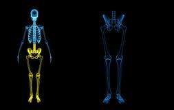 De benen van het skelet Stock Foto's