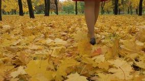 De benen van jonge slanke mooie vrouw lopen Esdoornbladeren in de herfstpark stock videobeelden
