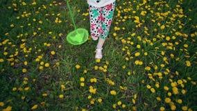 De benen van kinderen gaan door bloeiende paardebloemen in de weide stock footage