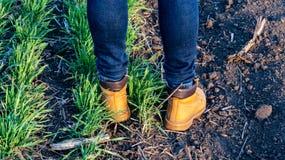 De benen van de vrouw in schoenen stock afbeelding