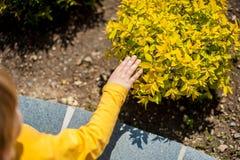 De berörda handväxterna för pojke Royaltyfri Foto