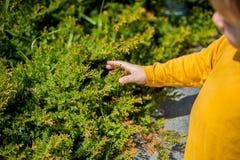 De berörda handväxterna för pojke Royaltyfri Bild