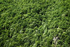 De berg begroet bostextuurachtergrond stock afbeelding