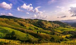 De berg bereikt landschap, Pah Pong Piang in maejamchiangmai een hoogtepunt, Padie Royalty-vrije Stock Afbeelding