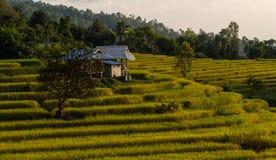 De berg bereikt landschap, Pah Pong Piang in maejamchiangmai een hoogtepunt, Padie Stock Afbeeldingen