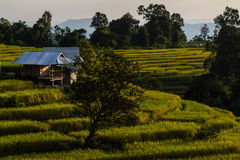 De berg bereikt landschap, Pah Pong Piang in maejamchiangmai een hoogtepunt, Padie Stock Foto