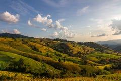De berg bereikt landschap, Pah Pong Piang in maejamchiangmai een hoogtepunt, Padie Royalty-vrije Stock Afbeeldingen