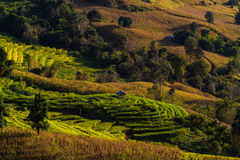 De berg bereikt landschap, Pah Pong Piang in maejamchiangmai een hoogtepunt, Padie Stock Afbeelding