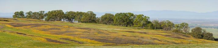De Berg Ecologische Reserve van de het noordenlijst, Oroville, Californië royalty-vrije stock foto's
