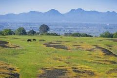 De Berg Ecologische Reserve van de het noordenlijst, Oroville, Californië Royalty-vrije Stock Foto