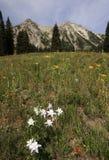 De Berg van Beckwith van het oosten door Kebler Pass Stock Foto's