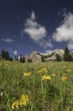 De Berg van Beckwith van het oosten door Kebler Pass Royalty-vrije Stock Fotografie