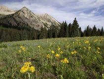 De Berg van Beckwith van het oosten door Kebler Pass Royalty-vrije Stock Foto's