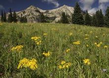 De Berg van Beckwith van het oosten door Kebler Pass Royalty-vrije Stock Afbeeldingen