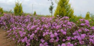 De berg van bloemen stock afbeeldingen