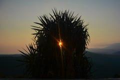 De berg van de boomzonsondergang stock foto