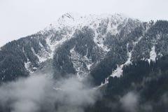 De Berg van de bomensneeuw Royalty-vrije Stock Afbeelding