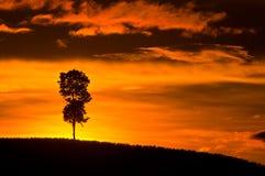 De Berg van de boomschaduw Royalty-vrije Stock Foto