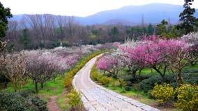 De berg van de pruim in Nanjing van China Royalty-vrije Stock Foto's