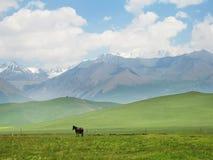 De berg van de sneeuw met een paard stock afbeelding